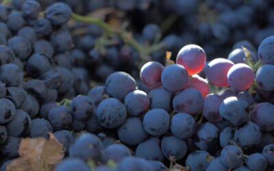 Portugalin viineissä on viehätystä